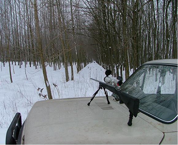 9510f19b09 Nel nostro Paese la caccia a palla con la carabina si potrebbe suddividere  in quattro specialità: la battuta al cinghiale, la caccia ai piccoli  selvatici ...