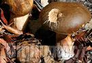 Raccolta funghi Pistoia