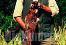 Sospesa caccia a lepre e fagiani nella provincia di Parma
