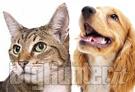 Cani e gatti vegani
