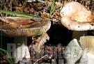 I funghi difendono la salute