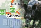 Caccia cinghiale Genova