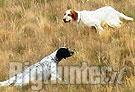 Cani da ferma