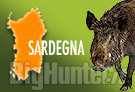Cinghiale Sardegna