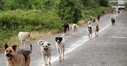 Cani vaganti