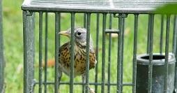 Calendario Fiere Ornitologiche 2020.A Crespina Campionato Italiano Uccelli Canori Bighunter