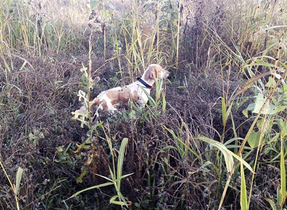 Calendario Pastore Tedesco 2020.Addestramento Cani Ridotto Orario Nelle Marche Bighunter