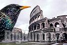Invasione storni a Roma