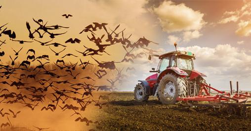 Calo uccelli agricoltura