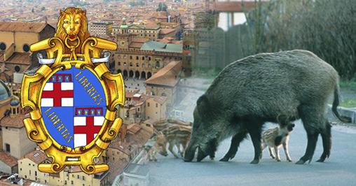 Cinghiali Bologna cerca cacciatori