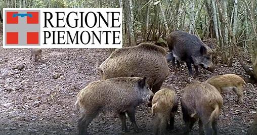 Cinghiali Piemonte